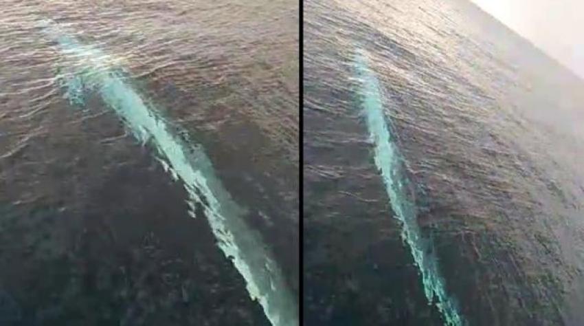Türkiye'de oluklu balina görüldü
