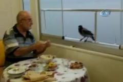 Akıllı karga her iftar sofrada