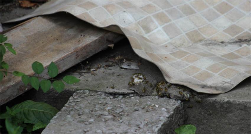 Arı kovanı yıkıldı, sahibi hastanelik oldu