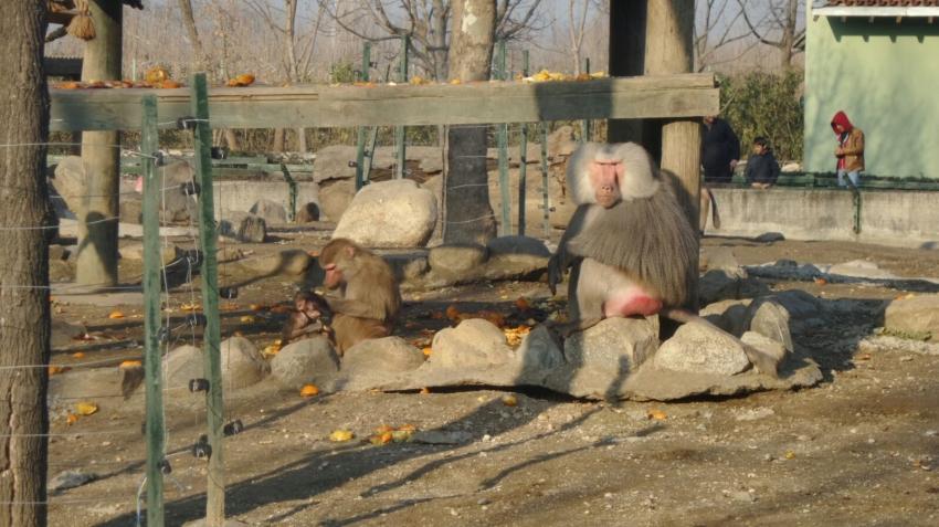 Bursa Hayvanat Bahçesi sakinlerinin güneş banyosu...