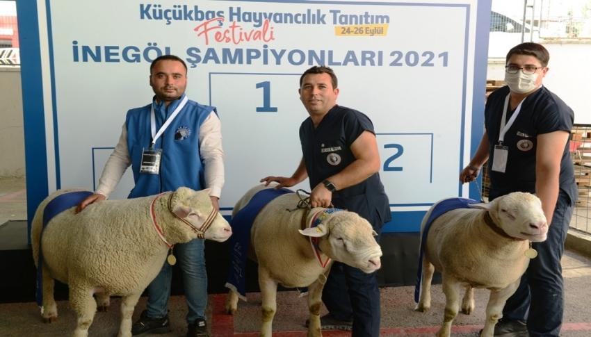 Bursa'da küçükbaş hayvanların katıldığı 'güzellik yarışması' renkli anlara sahne oldu