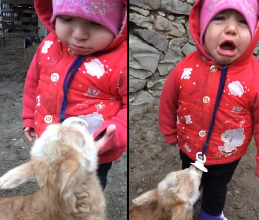 Bebek ile yavru keçinin emzik mücadelesi