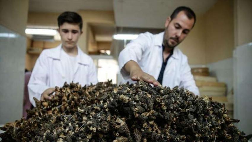 Virüs sayesinde kilosu 130 lira oldu!