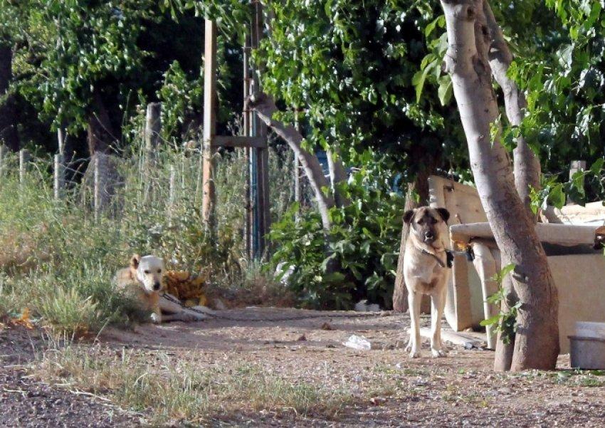 Kuduz köpek dehşeti ! 6 ay süreyle karantinaya alındı