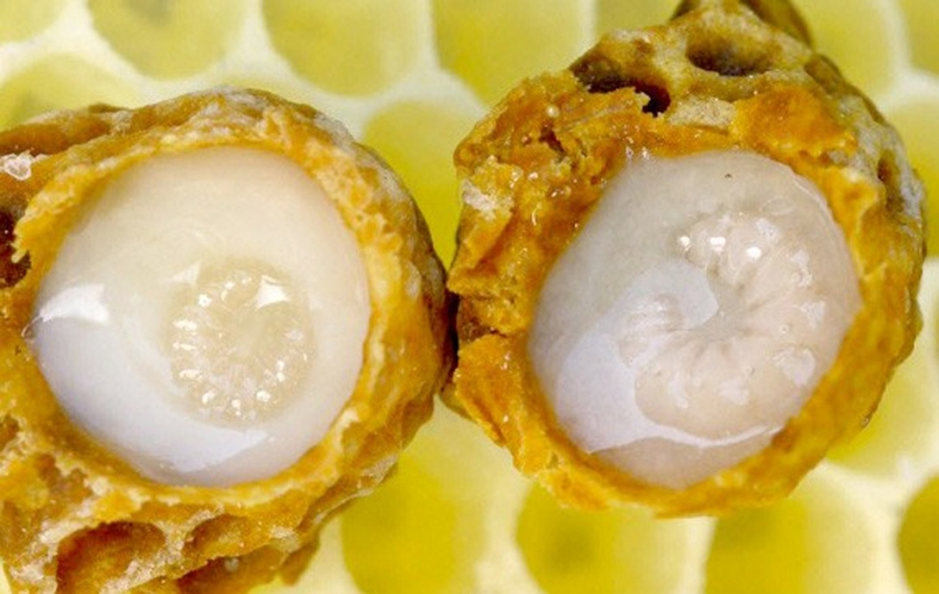 Arı sütünün bilinmeyen faydaları