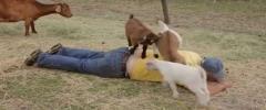 Beli ağrıyan çoban tedavisi