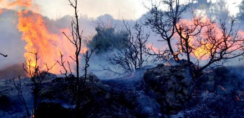 Tarım arazisinde korkutan yangın