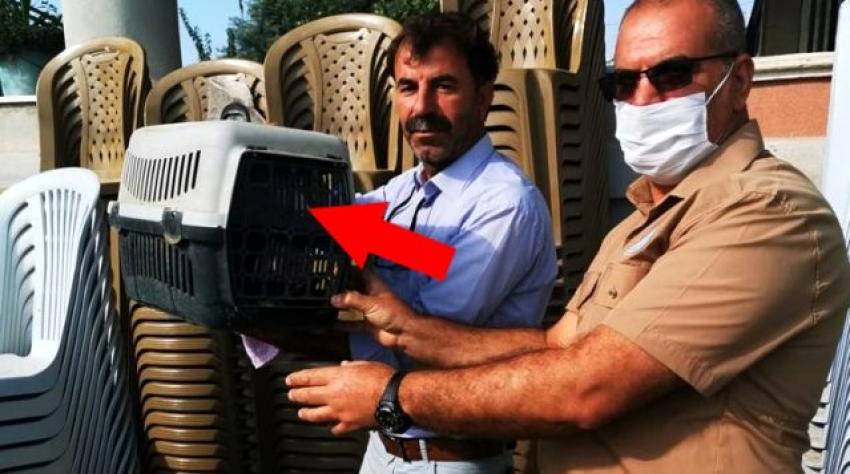 Türkiye'de kanla beslenen yarasa yakalandı