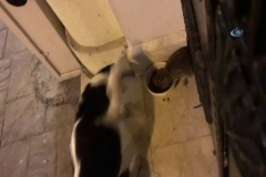 Bu da kedi maması yiyen 'sokak faresi'