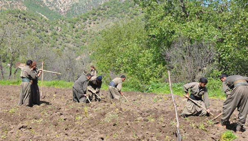 PKK bu kez Kandil'de tarlaya indi