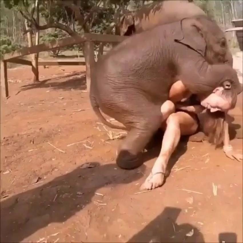 woman-fucked-by-elephant-thanks-for-the-ass