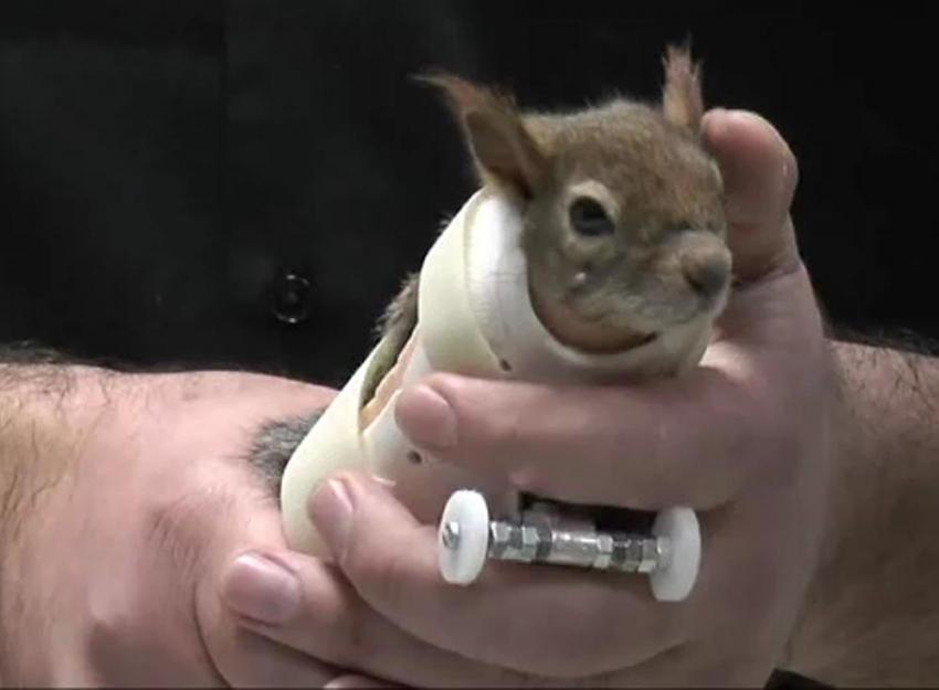 Sincap Karamel protez kollarına kavuştu