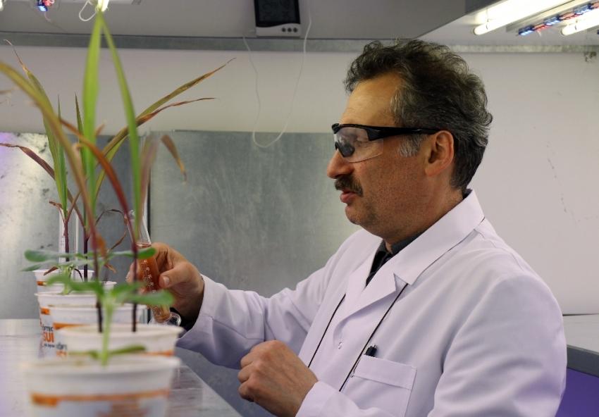 Atık molekülle bitkiler için besin üretildi