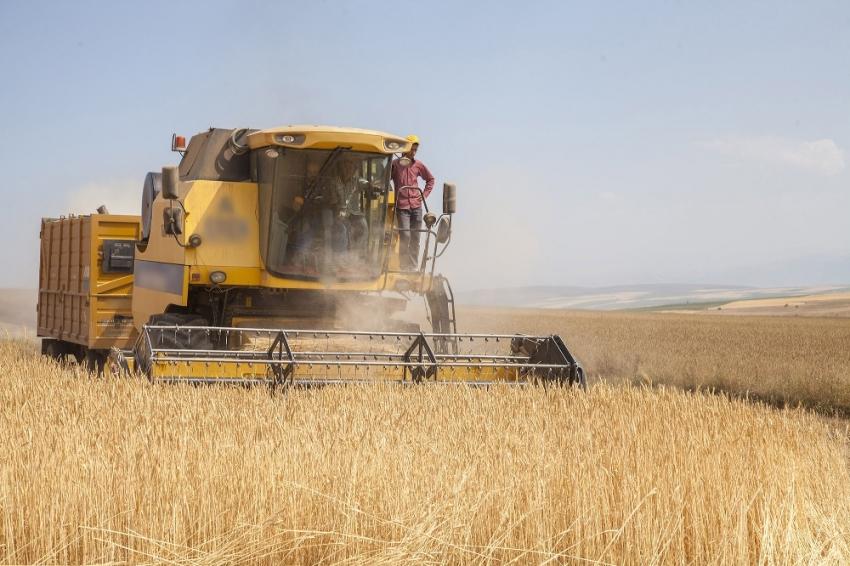 Buğday, arpa, mısır ve pirinç ithalatında tarife kontenjanı açıldı