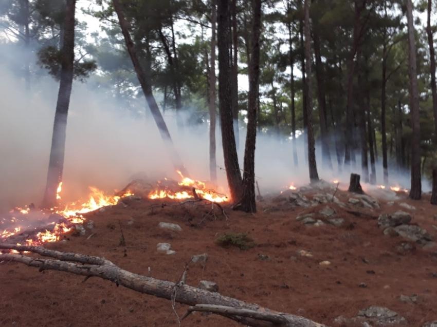 Manavgat'ta düşen yıldırım yangına yol açtı