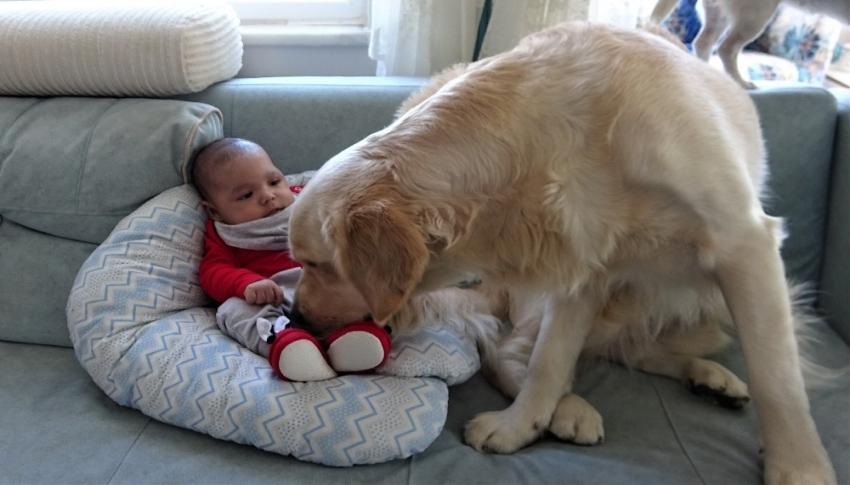 Bursa'da köpek yeni doğan bebeği kimseyle paylaşmıyor