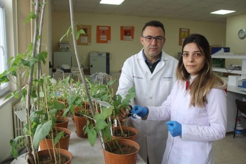 Sivas'ta bilim adamları kuraklığa dayanıklı tohum geliştiriyor