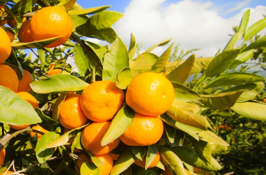 Sağlıklı ve güzel bir cilt için gerekli vitaminler