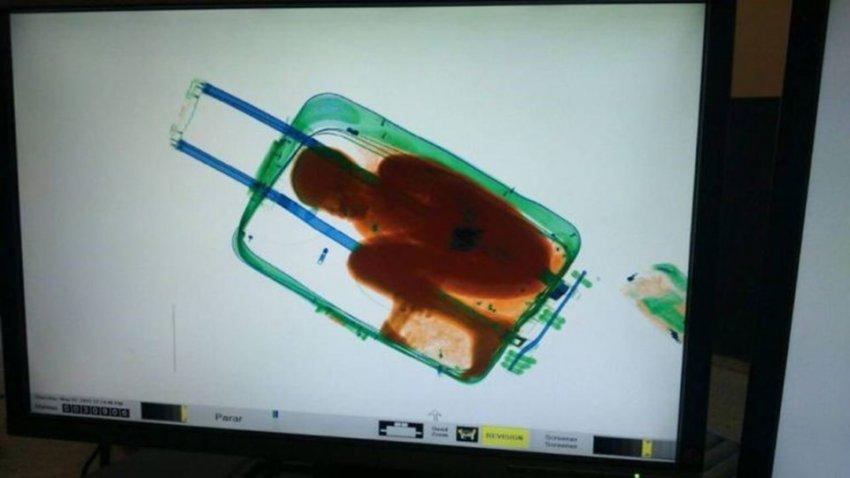 Sınır polisi bavuldan çıkana inanamadı