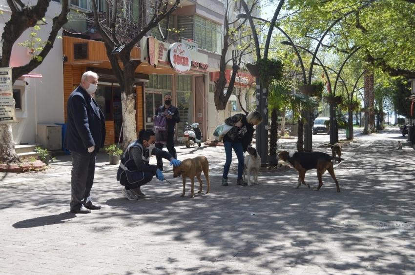 Ünlü tatil merkezinde sokak hayvanları aç kalmasın diye çabalıyorlar
