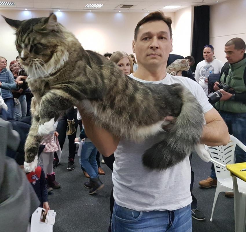 Kedilere servet teklif edildi