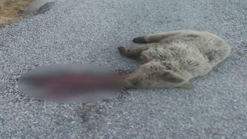 Dağdan köye inen ayıya araba çarptı