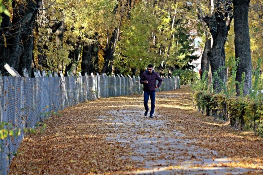 Sonbahar yaprakları 3 gün boyunca süpürülmeyecek