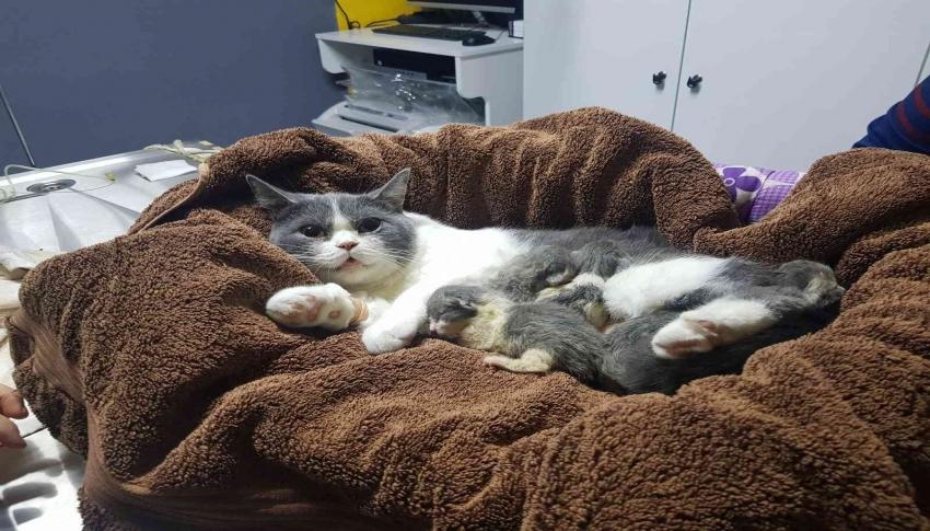 Doğumu geciken kediye sezaryen yapıldı