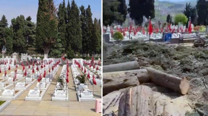 Belediye mezarlıktaki selvi ağaçlarını kesti