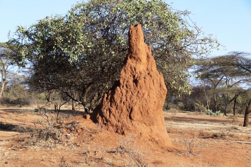 Büyüleyen karınca gökdelenleri