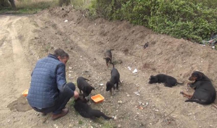Köpeğe ve yavrularına sahip çıktı