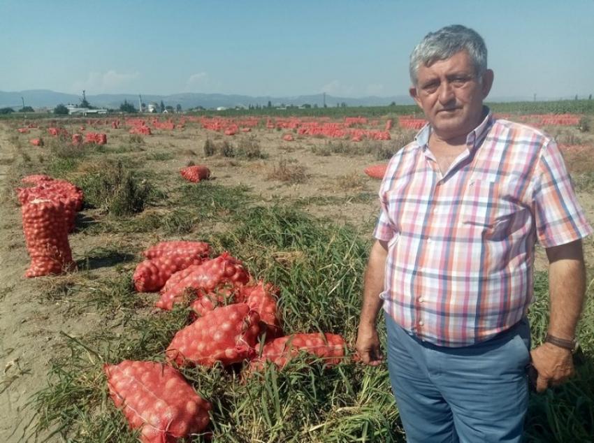 Bursa'da çiftçi zor durumda!