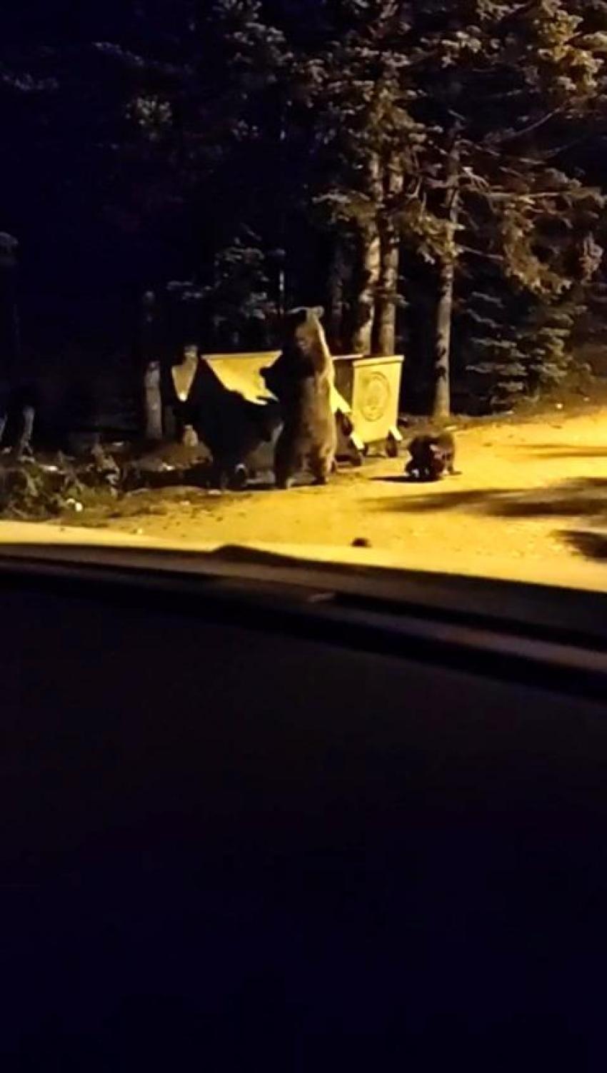Uludağ'a tatile gelen turist anne ayı ve yavrularını görünce...