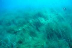 Depremden bir gün önce denizaltından çekilen görüntü ürküttü