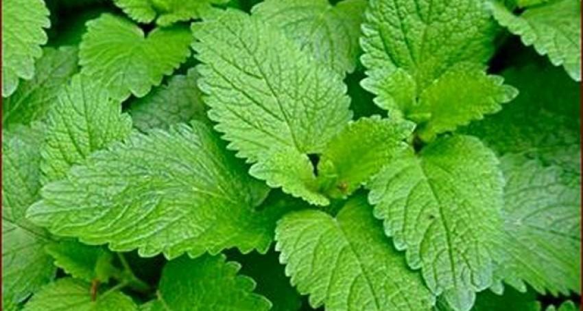 'Sinir sisteminizi doğal bitkilerle rahatlatın'