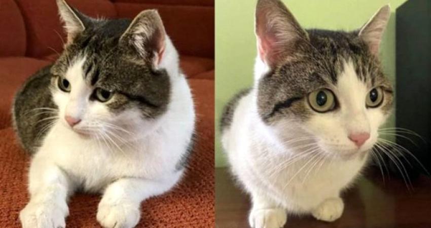 'Doğaüstü güçleri olan' kedisini satışa çıkardı