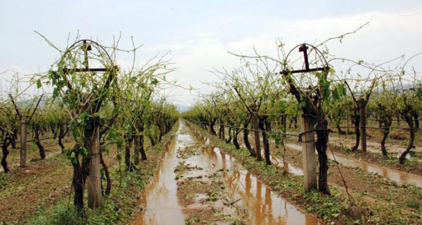 Dolu yağışı üzüm bağlarını vurdu