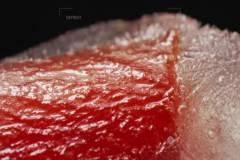 Dondurulmuş Meyve Ve Sebzelerin Huzur Veren Erimesi