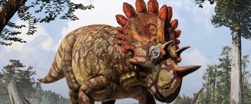 Dünyanın en büyük dinozoru görücüye çıktı