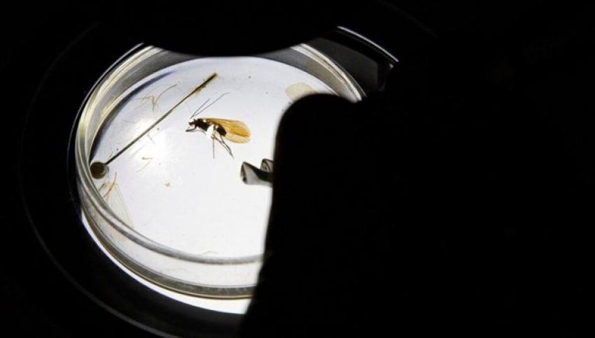 Yeni böcek türüne koronavirüs adı verildi