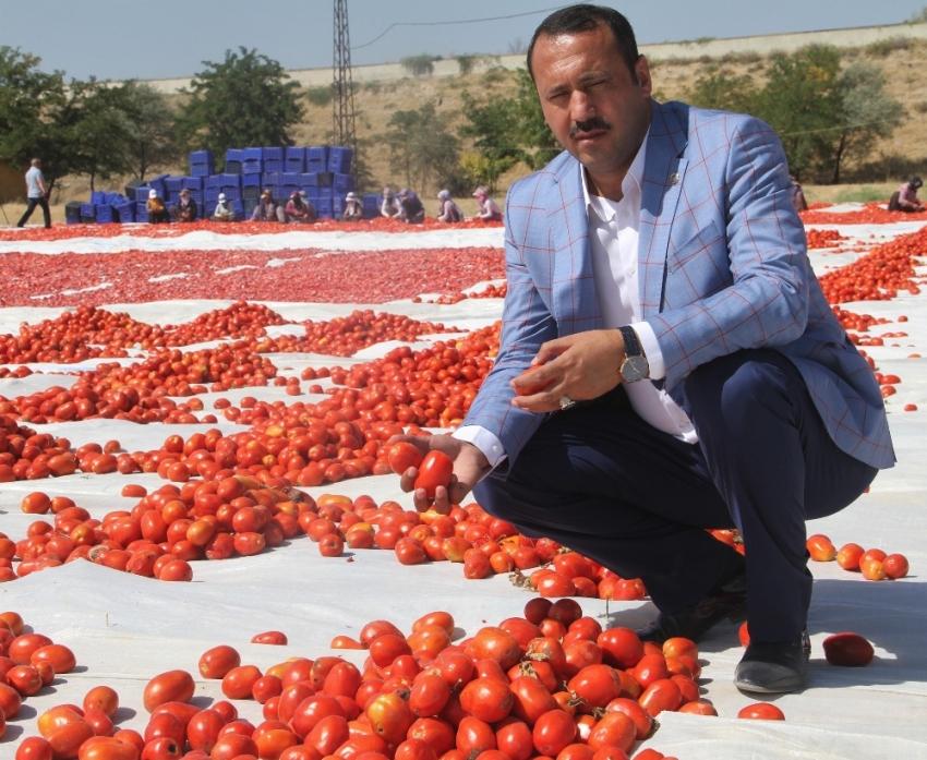 Tonlarca domates kurutulup dünyaya satılıyor