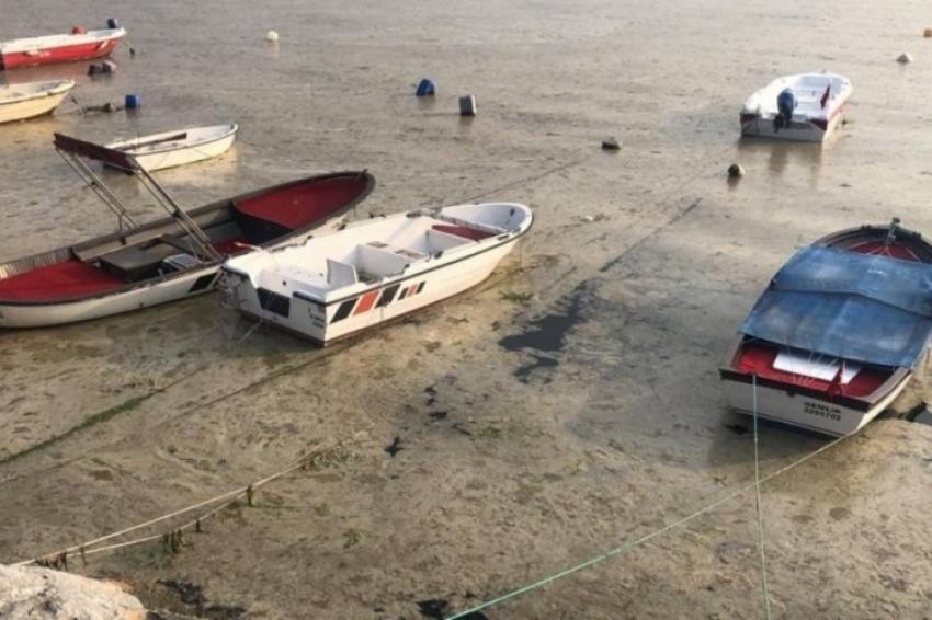 Bursa sahillerinde balık ölümleri başladı