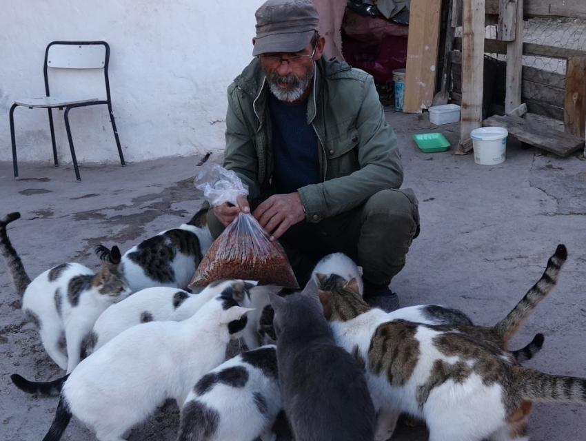 22 yıl önce bir kedi sahiplendi, şimdi 30'dan fazla kedisi oldu