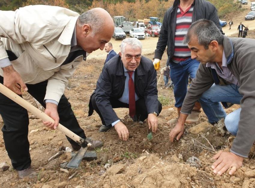 Orhaneli'de 63 bin fidan topraklı buluştu