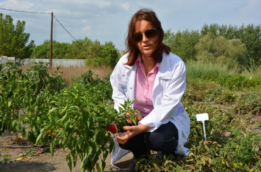 Uludağ Üniversitesi'nde yerli tohum seferberliği...