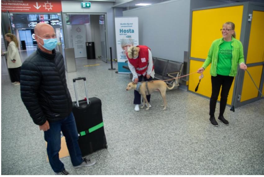 Covid-19'u tespit etmek için eğitimli köpekler kullanılacak