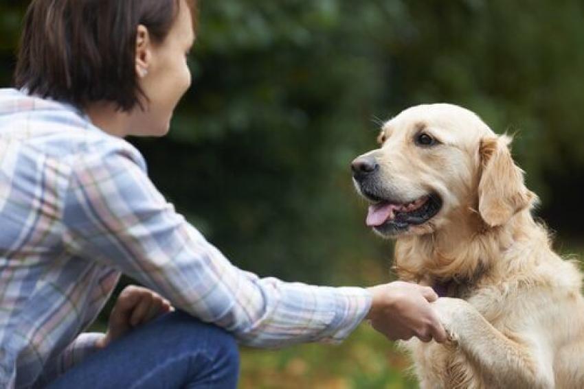 Evcil hayvan sahiplerine müjde!