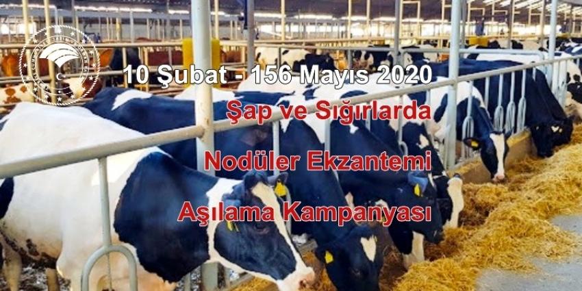 Hayvanların zorunlu aşılarını yaptırmayanlara 13 bin 934 TL para cezası