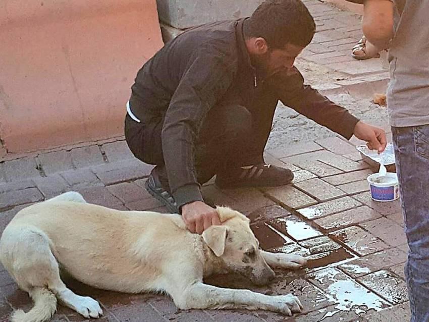 Zehirlenen sokak köpeğini böyle kurtardı