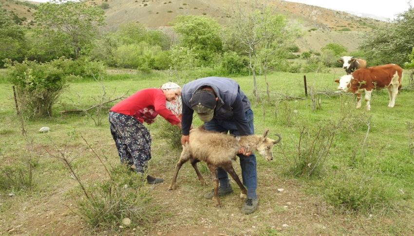 Yaralı şamuaya köy sakinlerinden yardım eli
